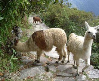Cusco To Lima (12 Days) Incas & Amazon (Inc. Amazon Jungle)