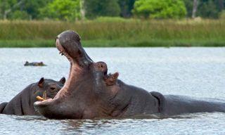 Okavango Delta Experience - Independent