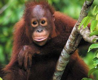 Borneo Adventure