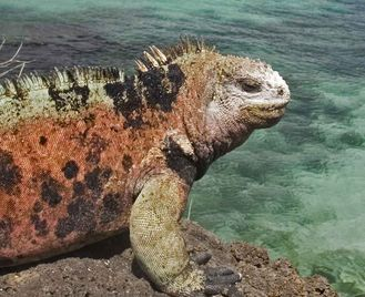 Galapagos Encounter: Southern Islands (Grand Queen Beatriz)