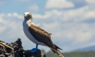 Galapagos Encounter: Central Islands  (Grand Queen Beatriz)