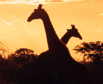 Southern Africa Experience