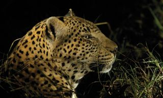 Cape Town & Kruger Experience: Independent