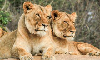 Kruger, Chobe & Falls