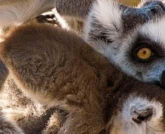 Berenty Reserve Madagascar Experience: Independent