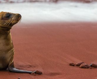 Galapagos Adventure: Northern Islands (Grand Daphne)