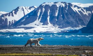 Svalbard Odyssey