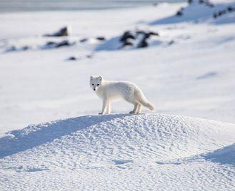 Arctic Complete