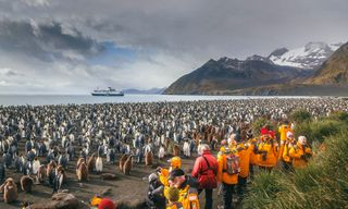 South Georgia and Antarctic Peninsula: Penguin Safari