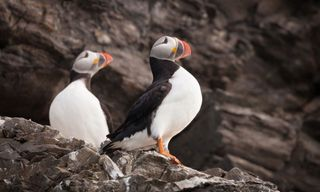 Arctic Saga: Exploring Spitsbergen via the Faroes and Jan Mayen