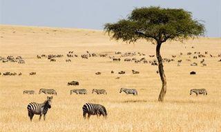 Kenya Safari & Zanzibar Beach Holiday
