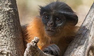 Sierra Leone Natural History Explorer
