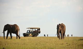 Visions Of Kenya Safari