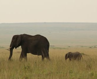 Kenya Elephant Safari