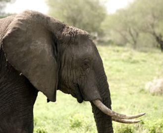 Tanzania Selous Safari And Zanzibar Honeymoon