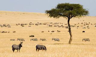 Exclusive Kenya Safari & Beach Holiday