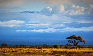 Kenya & Zanzibar Eco-Safari