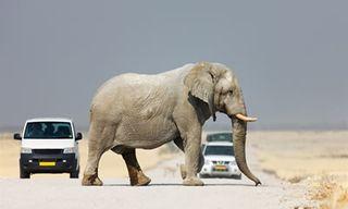 Open Road Self-Drive Namibia Safari