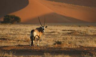Southern Namibia Camping Safari