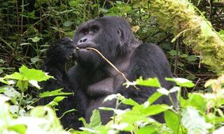 Pearl Of Africa: The Best Of Uganda (Private Tour)