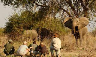 Norman Carr Safaris Authentic Walking Safari