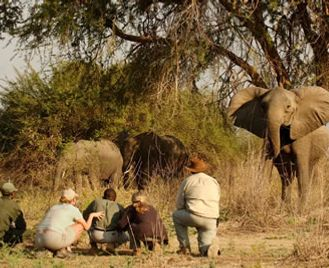 Norman Carr Safaris Authentic Walking Safari