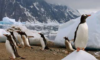 Antarctica Air Cruise