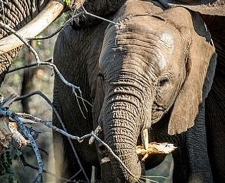 South Africa Safari & Mauritius Classic