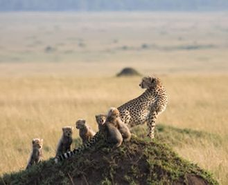 Masai Mara Safari & The Seychelles