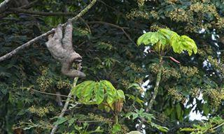 Costa Rica Sustainable Wildlife Tour
