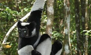 Madagascar Wildlife Discovery Tours 2020