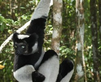Madagascar Wildlife Discovery Tours 2020