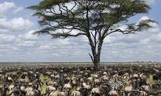 Tanzania Migration Safari
