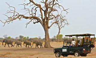 Zimbabwe Safari & Victoria Falls Adventure