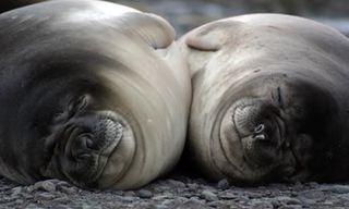 Falklands Wildlife Tour