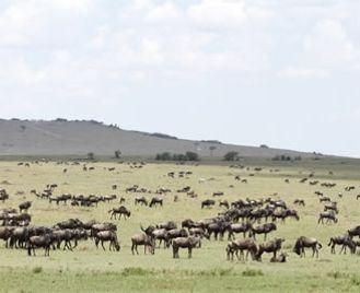 Masai Mara Safari & Zanzibar Beach Adventure