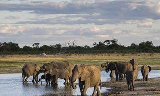 Essential Zimbabwe Safari