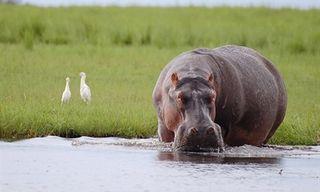 Botswana By Sanctuary Retreats