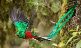 Birdwatching In Costa Rica