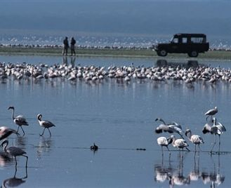 Birding And Wildlife In The Great Rift Valley