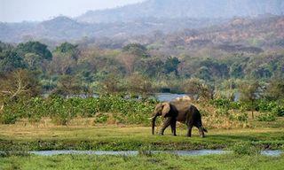 Malawi Safari And Beach