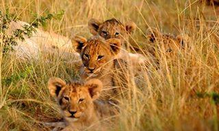 Family Friendly Cape Town & Eastern Cape Safari In School Holidays