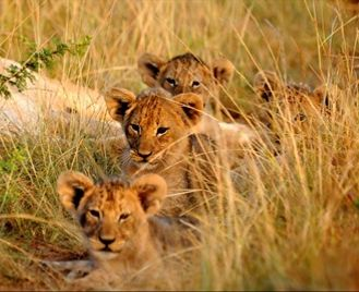Family Friendly Cape Town & Eastern Cape Safari In School Holidays
