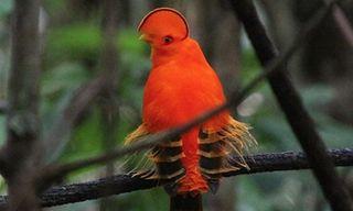 Birdwatching In Guyana