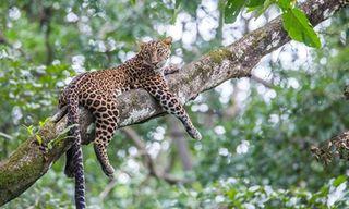 India Wildlife Experience: Pench & Satpura
