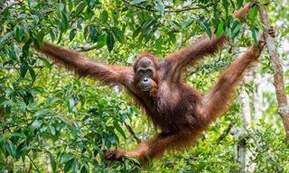 Wonders Of Borneo
