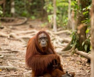 Borneo Wildlife Adventure