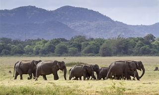 Ultimate Wildlife And Culture Tour