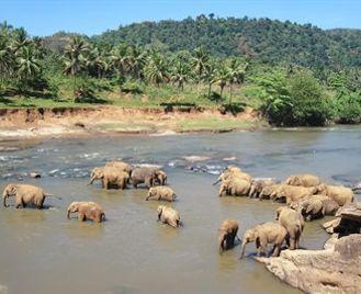 Off The Beaten Track Sri Lanka: Wildlife And Beach Tour