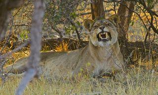 Magical Zimbabwe Safari